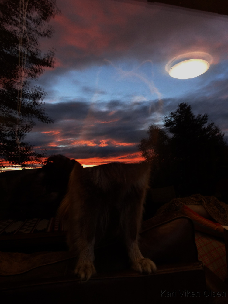 lapphund i solnedgang