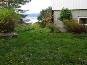 gressklipp høst