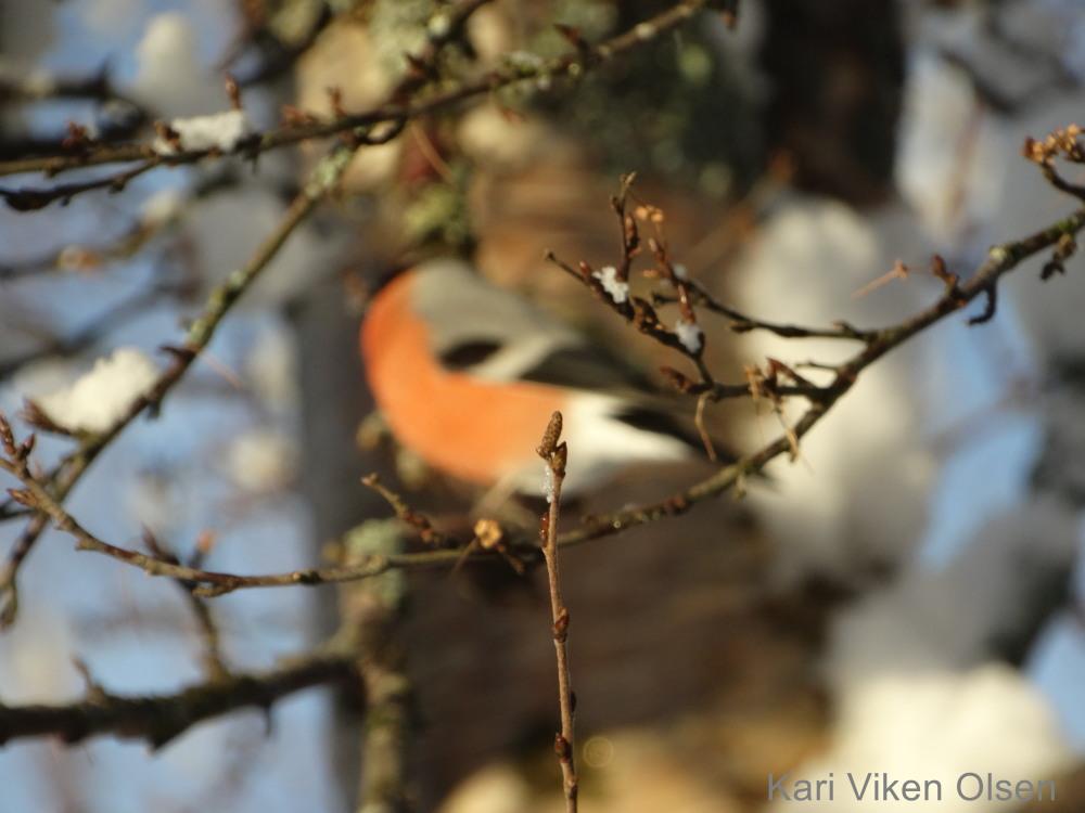 fotografering fokus på gren og grena gir fingern