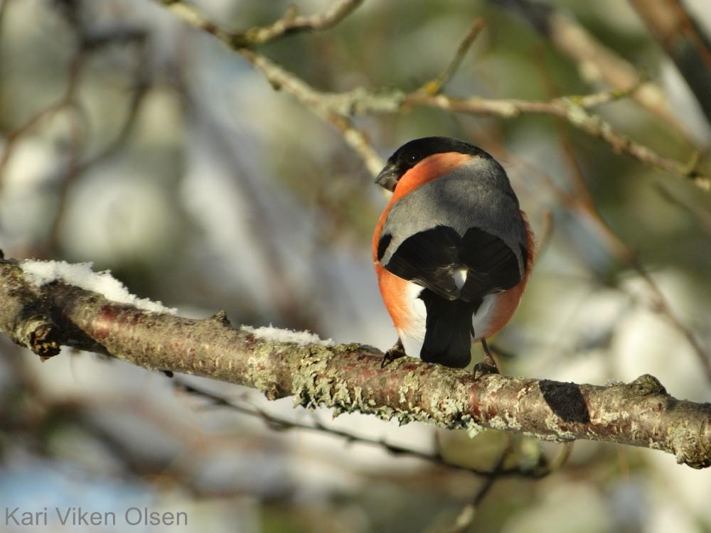 fotografering fuglen har fløyet 2