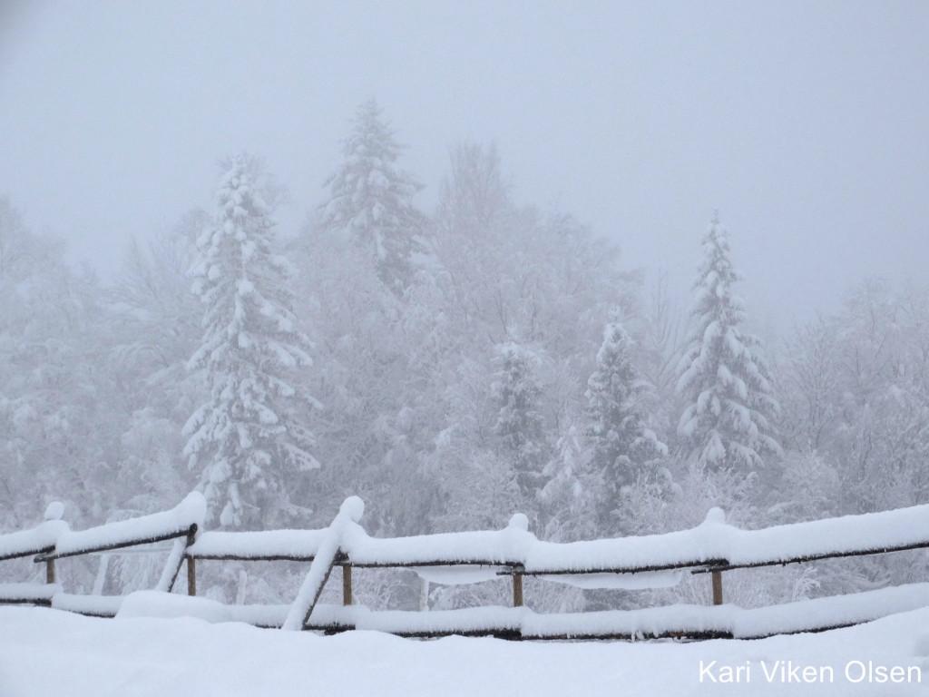 snøvær 1