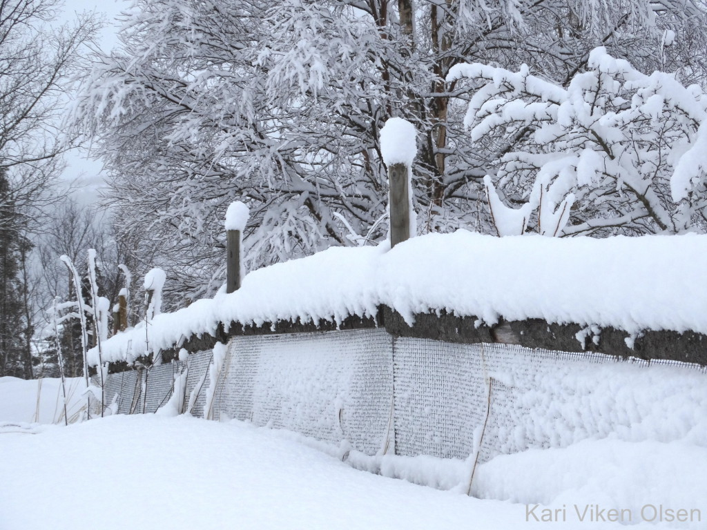 snøvær 4