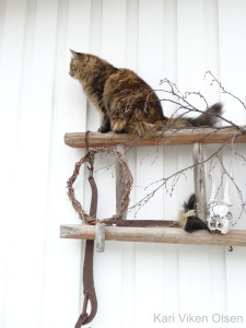 katt på stige