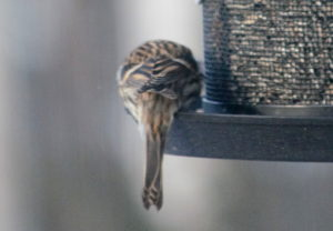 bilder og navn på fugler